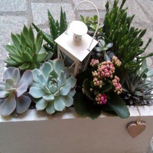 Mini vrtovi od sukulenata